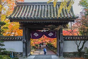 山口市~龍福寺の紅葉がスゴイことになってた。