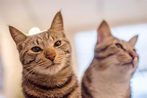 2月22日は猫の日らしいのでニャンニャンの写真をどうぞ。