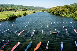 防府市佐波川を流れる水中鯉のぼりを紹介しよう。