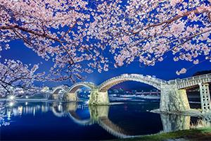 岩国の錦帯橋で夜桜撮ってきたよ!