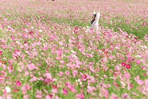 花の海のコスモス畑と埴生漁港のお祝い花火大会行ってきた!